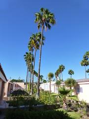 Relaxia Los Girasoles Bungalows (skumroffe) Tags: trees träd tree relaxialosgirasolesbungalows losgirasoles playadelinglés grancanaria islascanarias kanarieöarna spain spanien bungalows españa