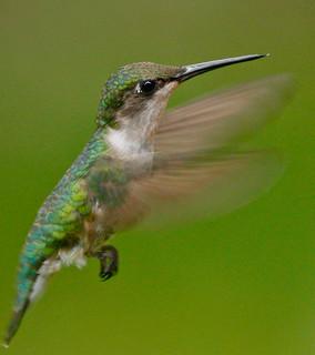 Hummingbird-129w
