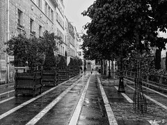 Lines (Jean S..) Tags: lines bw blackandwhite monochrome paris trees street buildings rain rainy