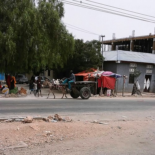 Donkey in the streets of Borama