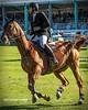Hugo Tavares (P.J.V Martins Photography) Tags: showjumping horse equestrian jump animal sport estoril cascais portugal