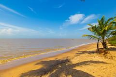 On the beach (alain_did) Tags: sun beach beacheslandscapes beautyinnature ombres coconut sky clouds paysage horizon sablejaune mer amazonia amériquedusud océanatlantique voyage tourisme tropiques tropical evasion vacances
