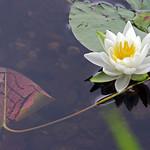 wellfield gardens 2 thumbnail