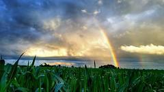 the rainbow bridge...(for Maggie) (BillsExplorations) Tags: rainbow rainbowbridge pet dog sky clouds separation field death loss maggie