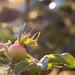 Fraîcheur matinale sur fleur défraîchi