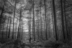 Caroline (shawn~white) Tags: aberystwyth bw blackandwhite ceredigion wales wideangle awe enchanting forest forestry idyllic magical monochrome mystical nostalgia path reminisce reminiscing retro serene serenity spiritual trees vintage wood woodland woods tirymynach unitedkingdom gb