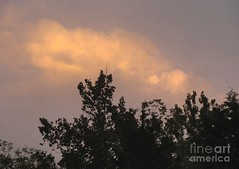 Cloud above the trees (Aliceheartphoto) Tags: fineartamericaartist photography fineartamerica faa pixelsartist fineart sky clouds trees naturephotography nature sony cybershot