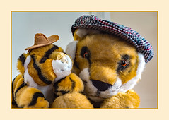 Hats off (fenman_1950) Tags: tiger smileonsaturday hatandco portrait cap