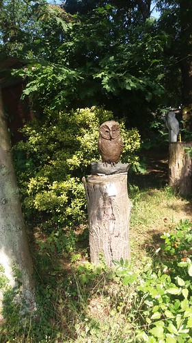 Taken today at Hawk Conversancy near Andover. #Nature #Owls #Wildlife