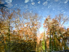 Always Look at the Wet Side of Life (andressolo) Tags: reflection reflections reflect reflected ripples río river water stones trees tea nature