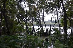 DSC_5808 (madelinedahm) Tags: urbanflooding srilankaflood srilanka colombo kelaniganga floodplain drainagedisaster risk reduction iwmi