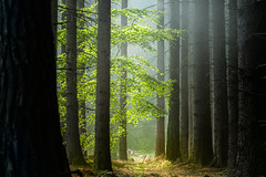Different moods on different places (Petr Sýkora) Tags: les nature forest trees outside morning czech