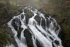Swallow Falls (Keartona) Tags: waterfall swallowfalls betwsycoed snowdonia wales northwales spring water beautiful nature cascade falls rain rainy day wet rocky rocks landscape