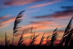 Happy Wake-up (NathalieSt) Tags: camargue europe france gard languedocroussillon leverdesoleil nature nikon nikond750 nikonpassion nikonphotography sunrise
