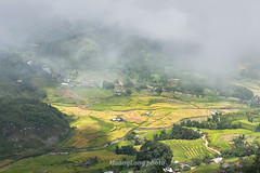 _J5K1660.0814.Sa Pả.Sapa.Lào Cai (hoanglongphoto) Tags: asia asian vietnam northvietnam northwestvietnam landscape scenery vietnamlandscape vietnamscenery vietnamscene mountain mountainouslandscape mist sunlight sunny valley terraces terracedfields harvest village house homes canon canoneos1dsmarkiii canonef50mmf12lusm tâybắc làocai sapa phongcảnh núi phongcảnhsapa phongcảnhtâybắc phongcảnhvùngnúi thunglũng sapả ruộngbậcthangt lúachín mùagặt nắng sươngmù bảnlàng nhà nhữngngôinhà sapalandscape sapamùagặt sapamùalúachín