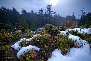 Sol de invierno - Vicente Perez Rosales N.P. (Patagonia - Chile)