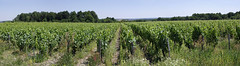 """Thoré-la-Rochette (Loir-et-Cher) (sybarite48) Tags: thorélarochette loiretcher france côteauxduvendômois vigne vine weinstock كرمة 藤 vid αμπέλου vite つる wijnstok winorośl videira винограднаялоза asma vignoble виноградник vinhedo winnica wijngaard ブドウ園 vigneto αμπελώνασ viñedo 葡萄园 vineyard weinberg agriculturebiologique biologischelandwirtschaft organicagriculture الزراعةالعضوية """"有机农业"""" agriculturabiológica βιολογικήγεωργία agricolturabiologica 「有機農法」 biologischelandbouw rolnictwoekologiczne органическоеземледелие organiktarım"""