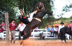 Veleda e Carrasco da Combate (Eduardo Amorim) Tags: gaúcho gaúchos gaucho gauchos cavalos caballos horses chevaux cavalli pferde caballo horse cheval cavallo pferd pampa campanha fronteira quaraí riograndedosul brésil brasil sudamérica südamerika suramérica américadosul southamerica amériquedusud americameridionale américadelsur americadelsud cavalo 馬 حصان 马 лошадь ঘোড়া 말 סוס ม้า häst hest hevonen άλογο brazil eduardoamorim gineteada jineteada