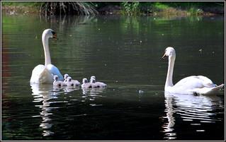Family life on a lake