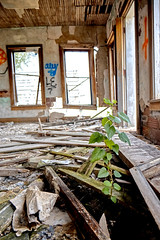 Plant in rubble (PnkyProductions) Tags: abandoned lost forgotten plant hope destroyed green
