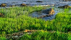 Marsh Tidepool as Tide Comes In (Alan Charles) Tags: ct connecticutshore hammonassetbeachstatepark hammonassetstateparkmeigspoint meigspoint seascape beach marsh ocean rockyshoreshore sea shore