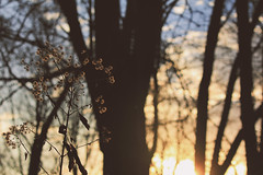 Golden Hour (emptysoundofhate) Tags: channahon illinois trees branches sun sunset sky clouds blur bokeh canon nature forest woods foliage forestry tree