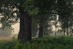 Estuary Rhine-Sieg (Netsrak) Tags: baum dunst europa europe landschaft meindorf natur nebel sieg fog haze landscape mist wald forest bäume