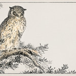 Japanese Scops Owl and Fir illustration from Pictorial Monograph of Birds (1885) by Numata Kashu (1838-1901). Digitally enhanced from our own original edition. thumbnail
