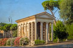 Cartoline da Roma, postcards from Rome: Tempio di Portuno (adrianaaprati) Tags: postcards temple antiquity mythology rome flowers oleander july summer roma