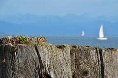 Microcosm Macrocosm (sandrasternenlicht) Tags: lakeconstance lake boats whiteandblue summer microcosm woodandwater wood water sail bodensee blauweis macrocosm segelboote
