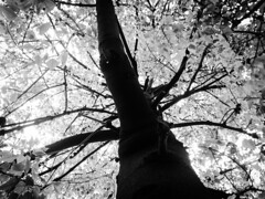 And I still remember  ️ Blackandwhite Monochrome Shades Of Grey Black Vs White Contrast Tree Branch Plant Nature Growth Silhouette Snowing Under The Tree Low Angle View Directly Below Focus On Shadow Beauty In Nature Tranquility Sunlight Urban Nature Stre (Achwaq Khalid) Tags: blackandwhite monochrome blackvswhite contrast tree branch plant nature growth silhouette snowing underthetree lowangleview directlybelow focusonshadow beautyinnature tranquility sunlight urbannature streetphotography hidingfromthesun outofreach sunscape treescape