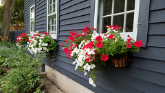 Red, White and Blue (Sun~Lover) Tags: flowers petunias red white house blue windows planters summer