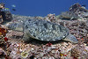 Turtles 10 (Petter Thorden) Tags: diving indonesia gili trawangan underwater turtle