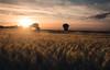 Sunset over a cornfield (Kevin Kistermann) Tags: lrthefader corn field korn feld outdoor aachen deutschland germany summer sunset sommer