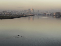 A morning paddle. (No1bus) Tags: cityairport eastlondon docks dawn sunrise ducks