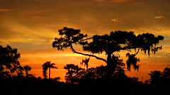 Sunset May sixth (Jim Mullhaupt) Tags: sunset sundown dusk sun evening endofday sky clouds color red gold orange pink yellow blue tree palm outdoor silhouette weather tropical exotic wallpaper landscape nikon coolpix p900 pond lake water reflection manateecounty bradenton florida jimmullhaupt cloudsstormssunsetssunrises photo flickr geographic picture pictures camera snapshot photography nikoncoolpixp900 nikonp900 coolpixp900
