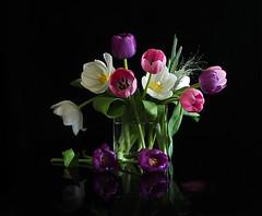 Tulips  in Glass Vase (Smiffy'37) Tags: tulips flowers stilllife colourful glass vase blackbackground
