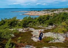 Coastal Outlook (bjorbrei) Tags: coast sea water ocean shore rock heather bushes trees sky clouds hankø norway