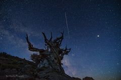 Shooting Stars over Ancient Bristlecone Pine (FollowingNature (Yao Liu)) Tags: ngc shootingstars meteor milkyway followingnature whitemountain bishop ancientbristlecone ancientbristleconepineforest
