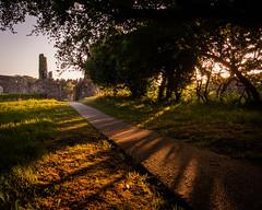 Ballycastle   |   Bonmargy Friary Golden Hour (JB_1984) Tags: bonmargyfriary friary ruins church cemetery tree shadow goldenhour sunset evening ballycastle countyantrim northernireland uk unitedkingdom nikon d500 nikond500