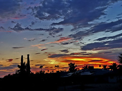 Dazed and Confused (oybay©) Tags: sunset arizona sky clouds silhouette cactus palmtrees color colors blue orange yellow cloud outdoor