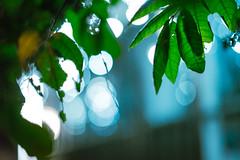 DSC08305 (SunThroughEyelids) Tags: nature green art ambient adventure awesome amazing a7ii aqua auckland landscape dark makro car night light follow hiking travelling exposure sky u