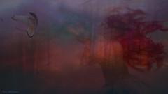 The Magic Night (jade2k) Tags: dreams woods magic woman digitalart