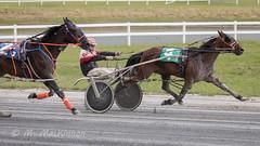 Century Downs June 16 2018 (tallhuskymike) Tags: centurydowns racing centurydownscasino horse horses alberta balzac event outdoors 2018 harnessracing calgary