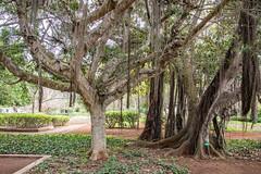 _DSC4856 (BasiaBM) Tags: botanical gardens rabat morocco