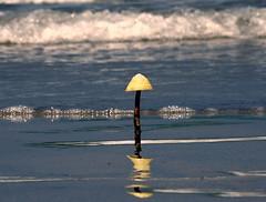C'est l'été  ... Il faut  sortir les  parasols :-) (Eric DOLLET - Ici et ailleurs) Tags: ericdollet bretagne plage été stbriac mer