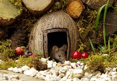 wild garden mouse in log pile (1) (Simon Dell Photography) Tags: wild garden mouse log pile mossy home house cute funny door fairy borrower hobbit sheffield simon dell tog photography s12 uk england old english countryside wildlife nature summer birds animals