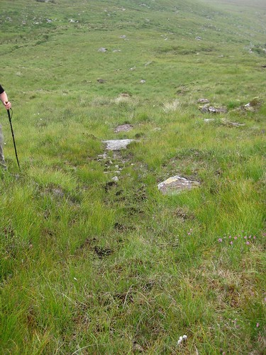 Upland flush with line of brighter green sedges. Photo by Micheline Sheehy Skefffington