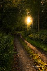 Follow the sun (Ellen van den Doel) Tags: schotland 2014 zomervakantie scotland juli augustus vakantie avoch verenigdkoninkrijk gb sunset forest s3