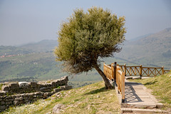 Solitary tree (mfatic) Tags: pergamum syncerror asiaminor izmir turkey tr